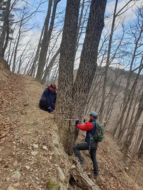 경상북도수목원-굴참나무.jpg